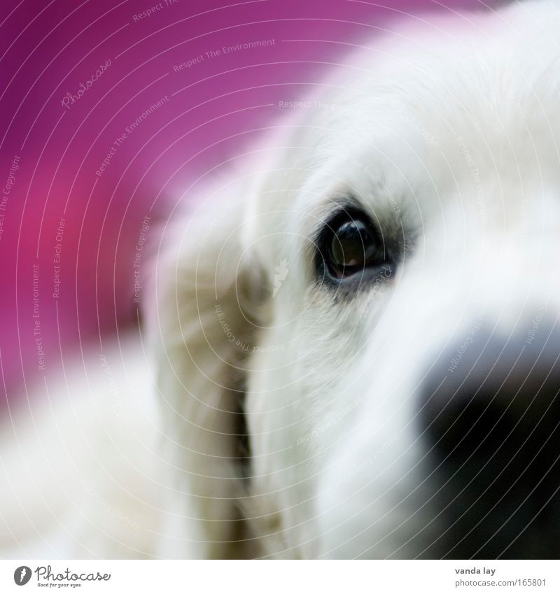 girl dog Colour photo Multicoloured Detail Macro (Extreme close-up) Deserted Copy Space left Copy Space top Neutral Background Blur Shallow depth of field
