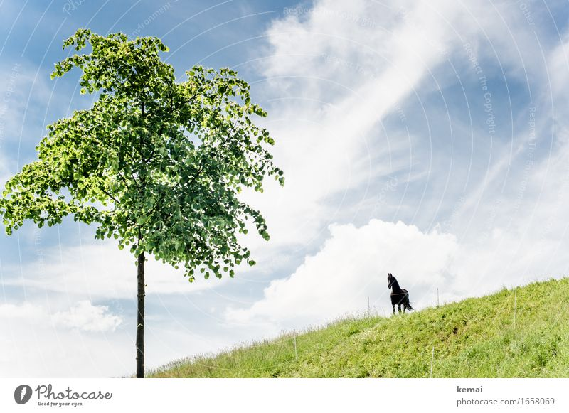 AST9. Hi, Fury. Environment Nature Landscape Sky Clouds Sunlight Summer Beautiful weather Tree Foliage plant Meadow Animal Farm animal Horse 1 Stand Growth Wait