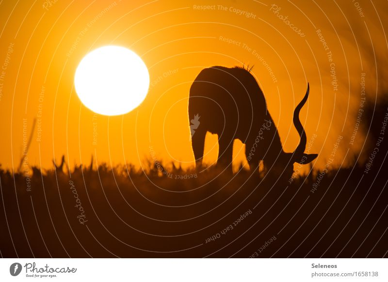Nature Vacation & Travel Summer Animal Far-off places Environment Eating Meadow Freedom Tourism Illuminate Wild animal Trip Adventure Wanderlust