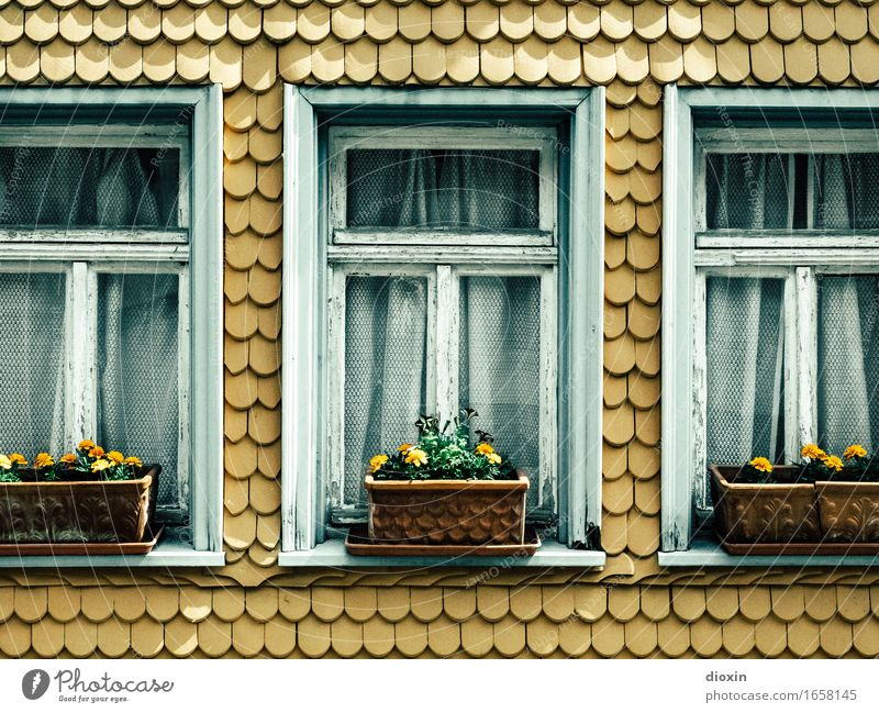 AST 9 | ] [] [ Flower Village Small Town House (Residential Structure) Facade Window Roofing tile Window box Beautiful Arrangement Staid Colour photo