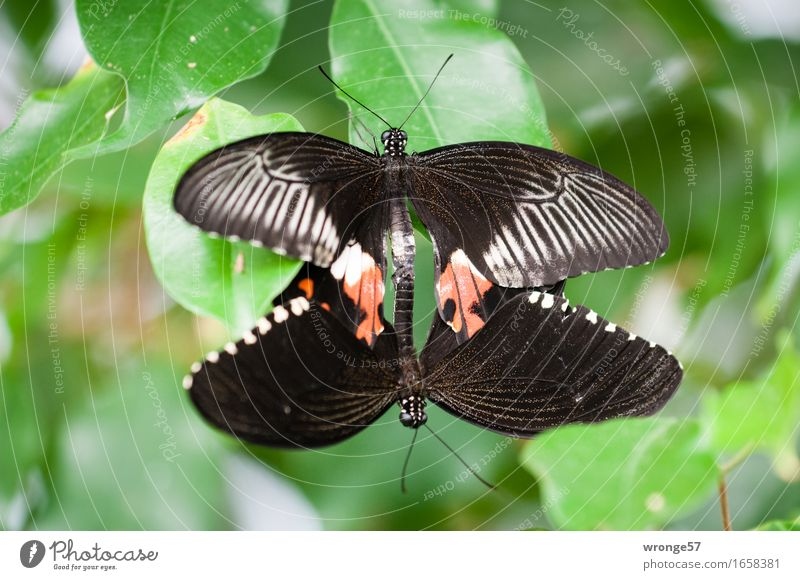 double decker Animal Butterfly Zoo 2 Gray Green Red Black Close-up Pair of animals In pairs Colour photo Subdued colour Interior shot Deserted Copy Space left