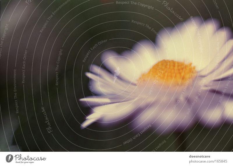 Nature White Flower Green Plant Summer Yellow Blossom Spring Elegant Esthetic Soft Analog Daisy 35mm film