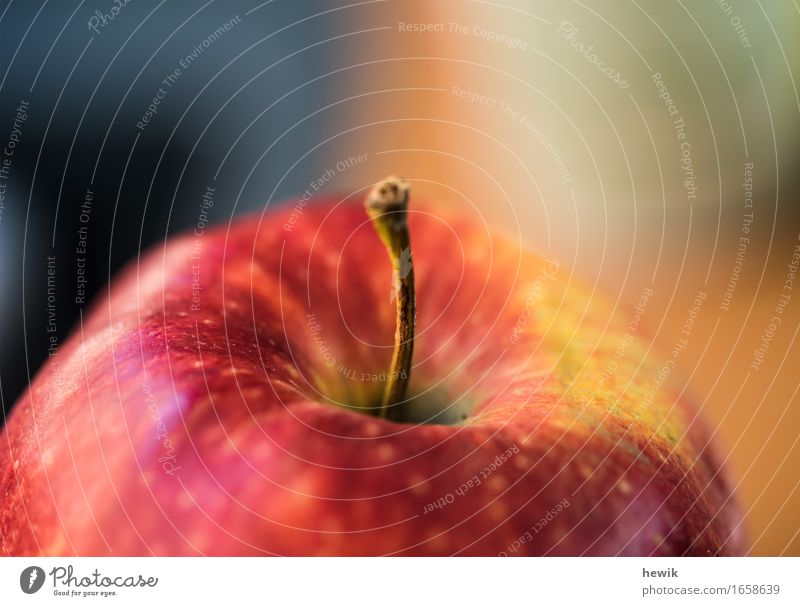 apple Food Fruit Apple Nature Multicoloured Yellow Red Colour photo Interior shot Close-up Detail Copy Space top Day Blur Shallow depth of field