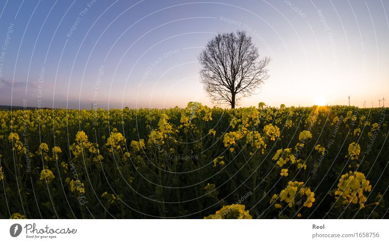 Sky Nature Plant Summer Beautiful Sun Tree Landscape Black Yellow Blossom Spring Wild Field Idyll Gold