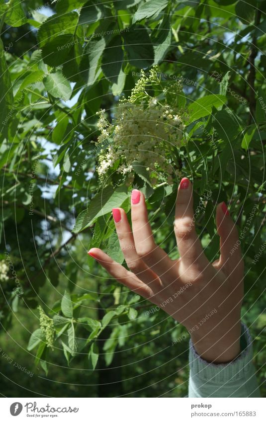 Human being Nature Youth (Young adults) Hand Tree Plant Summer Leaf Calm Relaxation Environment Life Feminine Movement Spring Happy