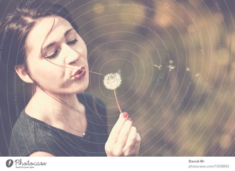 young pretty woman blows on a dandelion and lets the seeds fly around Sámen Flying Dandelion Mouth Face Summer Summery Woman