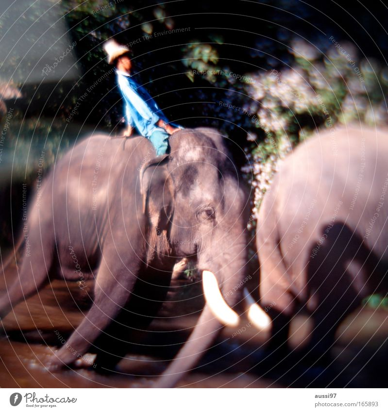 Jambo, jambo Exterior shot Experimental Animal portrait Environment Nature Landscape Virgin forest Asia Farm animal 1 2 Environmental protection Elephant