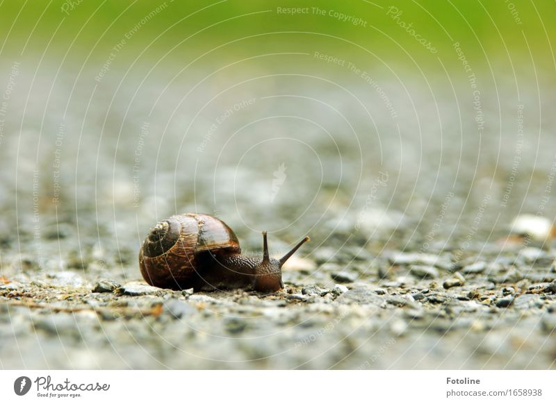 Motion blur? Not today! Environment Nature Animal Elements Earth Sand Summer Snail 1 Small Near Natural Snail shell Mollusk Feeler Crawl Slimy Stone