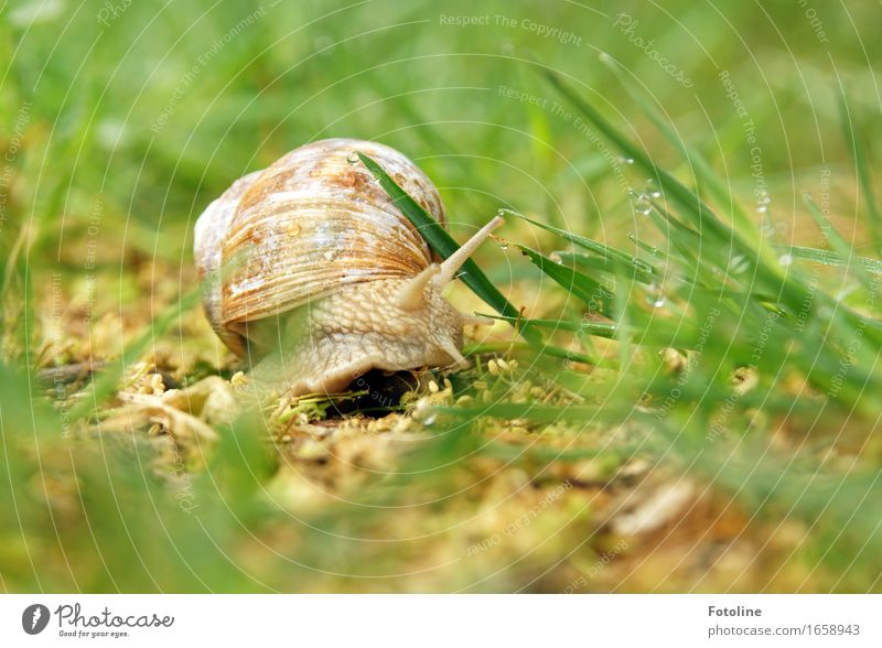 turn Environment Nature Plant Animal Elements Earth Water Drops of water Summer Grass Garden Park Meadow Snail 1 Bright Near Wet Natural Brown Green Snail shell