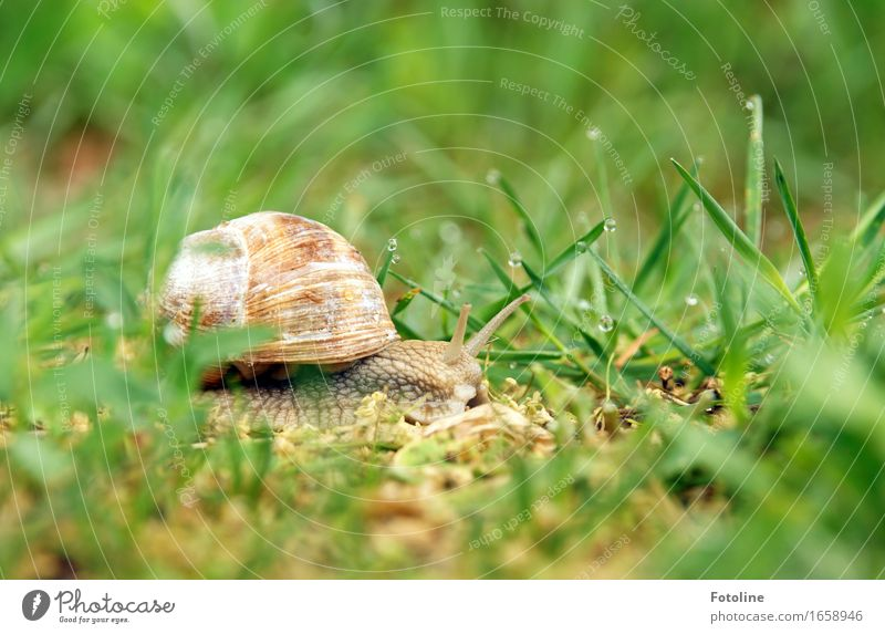 Travel Environment Nature Plant Animal Elements Earth Water Drops of water Summer Beautiful weather Grass Garden Park Meadow Snail 1 Free Small Near Wet Natural