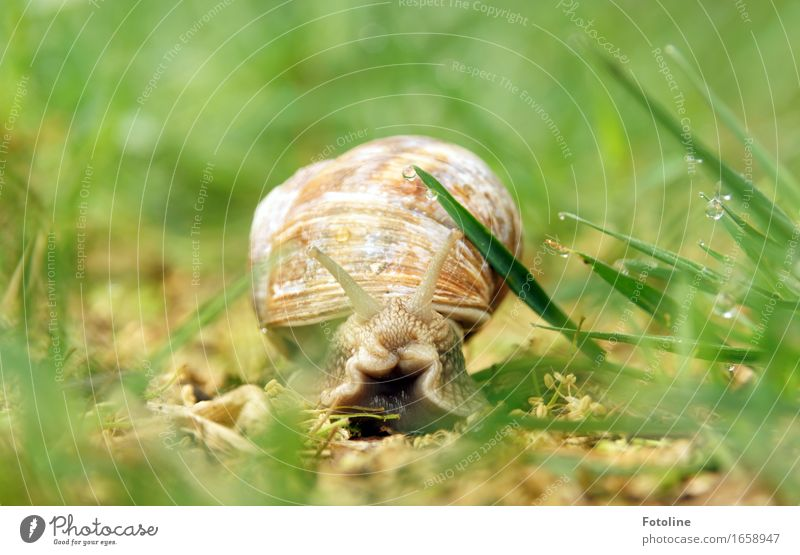 On the road with caravans Environment Nature Plant Animal Elements Earth Water Drops of water Summer Beautiful weather Grass Garden Park Meadow Snail 1 Bright