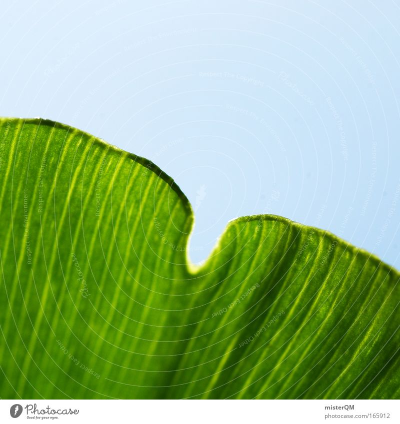 Sky Nature Green Leaf Environment Growth Biology Thread Decent Leaf green Photosynthesis Ginko Macro (Extreme close-up) Synthesis