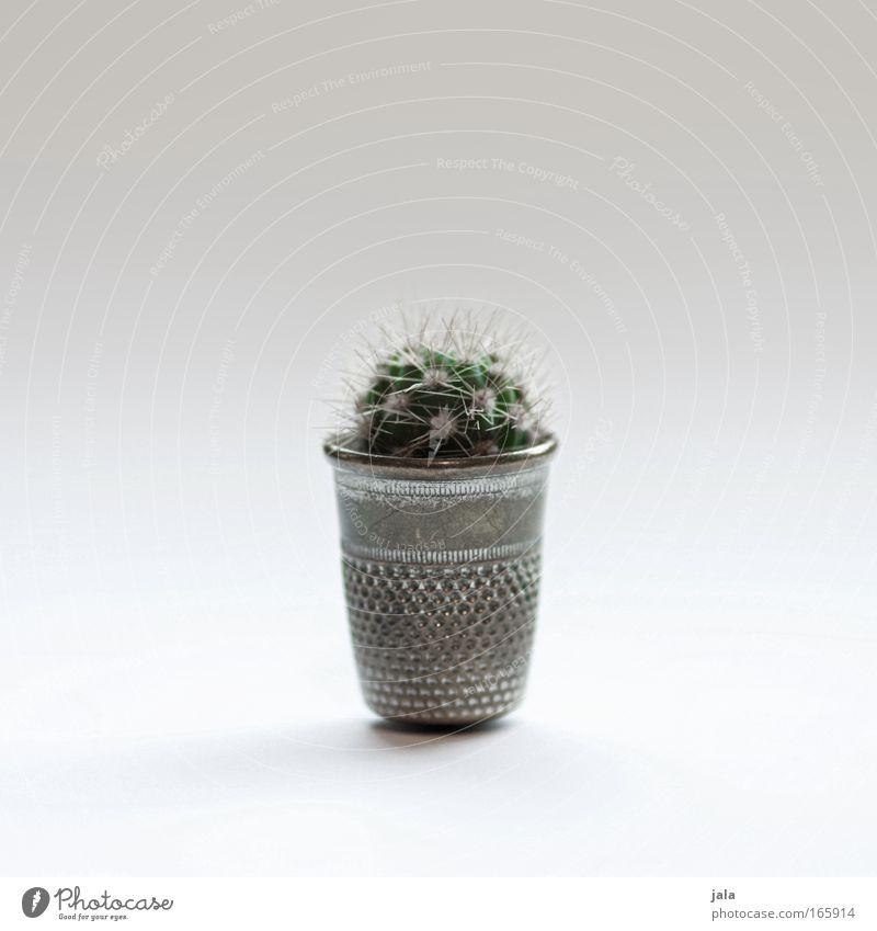 mini mini cactus Plant Cactus Foliage plant Pot plant Esthetic Exceptional Small Diminutive Beautiful Thorny Point Thimble Colour photo Interior shot Close-up