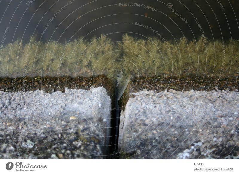 Nature Water Green Plant Stone Environment Concrete Lakeside Bizarre Pond Spacing