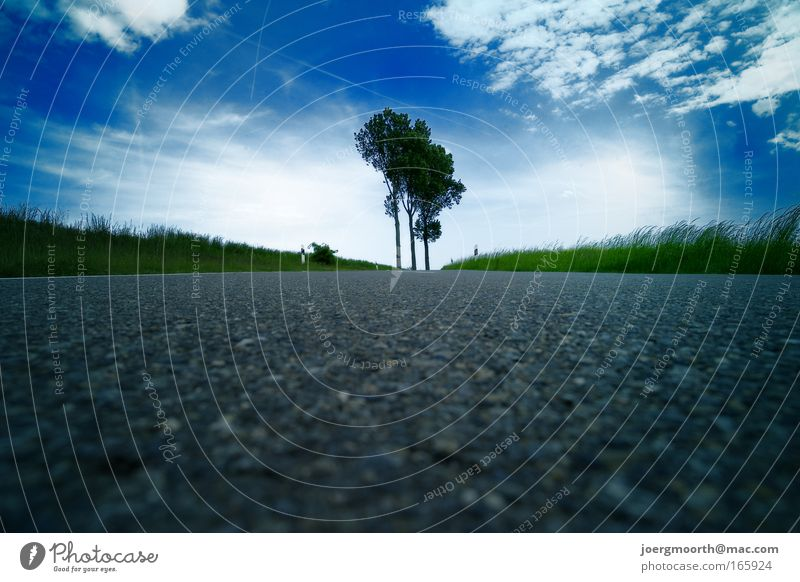 Where's the X? Colour photo Exterior shot Deserted Copy Space bottom Day Light Silhouette Sunlight Worm's-eye view Long shot Environment Nature Landscape Sky