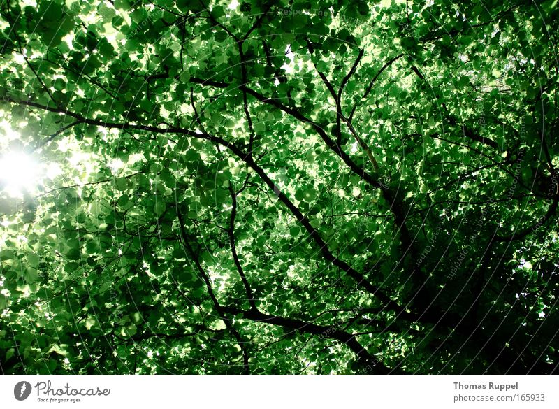 press Colour photo Exterior shot Deserted Day Sunlight Sunbeam Nature Spring Plant Tree Leaf Branch Green Environment