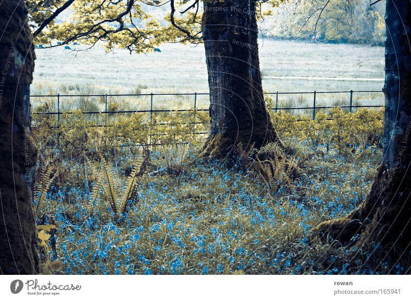 idyllically wooded Colour photo Exterior shot Deserted Dawn Nature Fog Tree Flower Grass Bushes Moss Dark Wet Gloomy Dream Idyll Calm Surrealism Mystic Blue