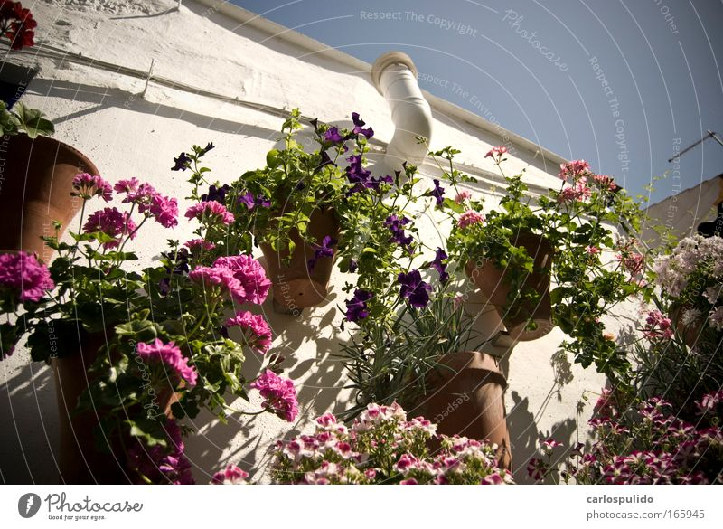 Nature House (Residential Structure) Blossom Spain Terrace Andalucia Mediterranean Old town Cordoba