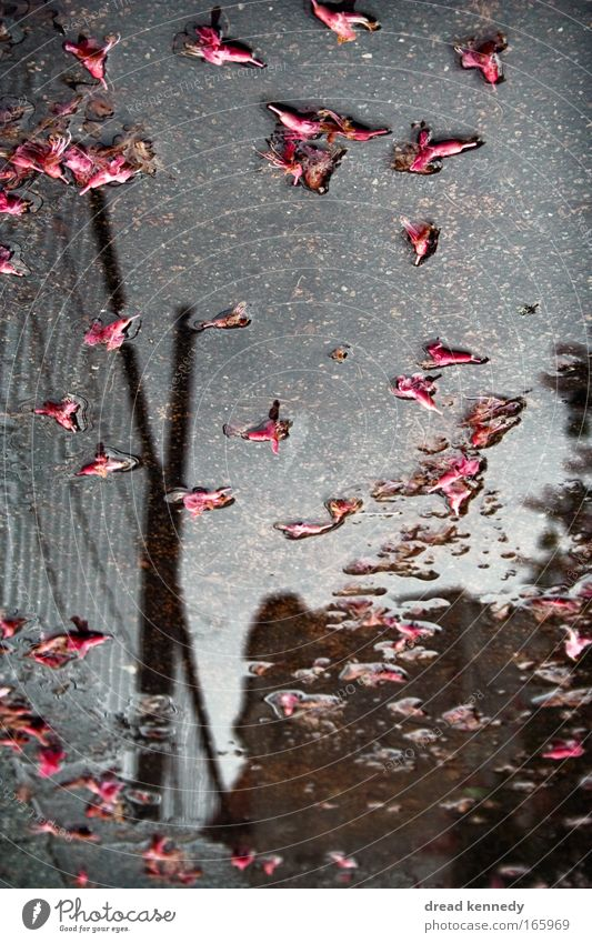 Thank you For Flowers Colour photo Reflection Calm House (Residential Structure) Water Sky Clouds Storm Rain Leaf Blossom Dream Wet Gloomy Puddle Self portrait