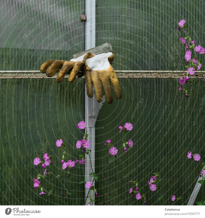 discarded Leisure and hobbies Gardening Greenhouse Plant Animal Flower Snail gardening gloves Blossoming Faded Old Yellow Pink Calm Effort Passion Break