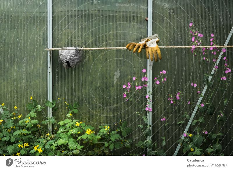 Greenhouse, garden gloves, wasp nest and weeds Leisure and hobbies Gardening Gardener Summer Plant Flower Leaf Blossom Wild plant celandine Gloves