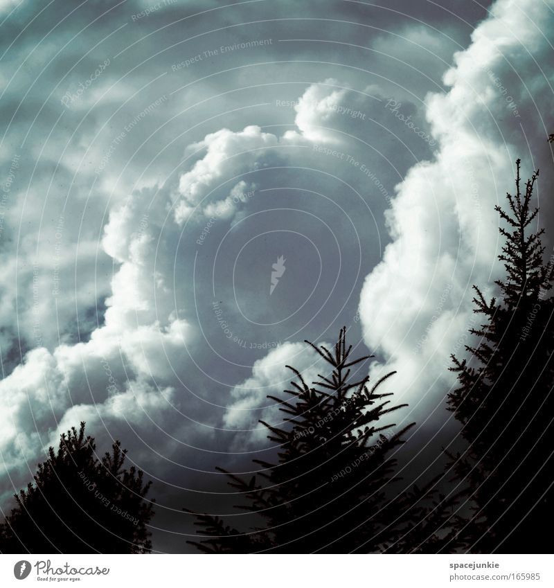 Monster in the clouds Colour photo Exterior shot Copy Space top Calm Mouth Work of art Painting and drawing (object) Nature Landscape Sky Clouds Climate