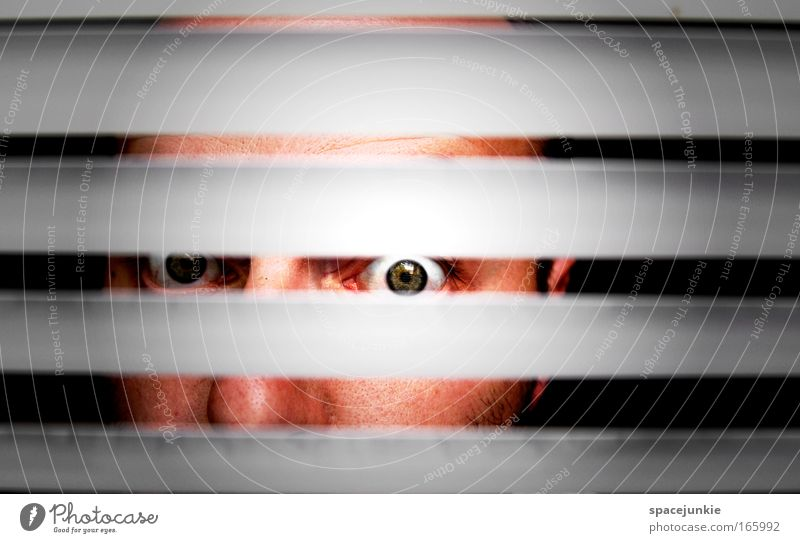 stripes Colour photo Copy Space top Contrast Looking Looking into the camera Face Man Adults Head Eyes 1 Human being Observe Discover Threat Curiosity Crazy