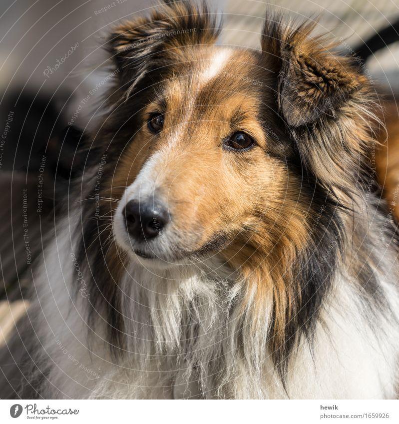 Dog White Animal Black Brown Curiosity Pet