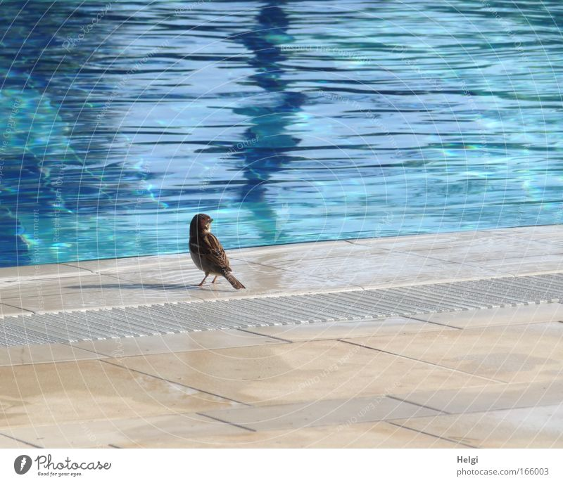 little sparrow by the big pool... Colour photo Exterior shot Deserted Copy Space right Copy Space top Copy Space bottom Day Shadow Sunlight Animal portrait