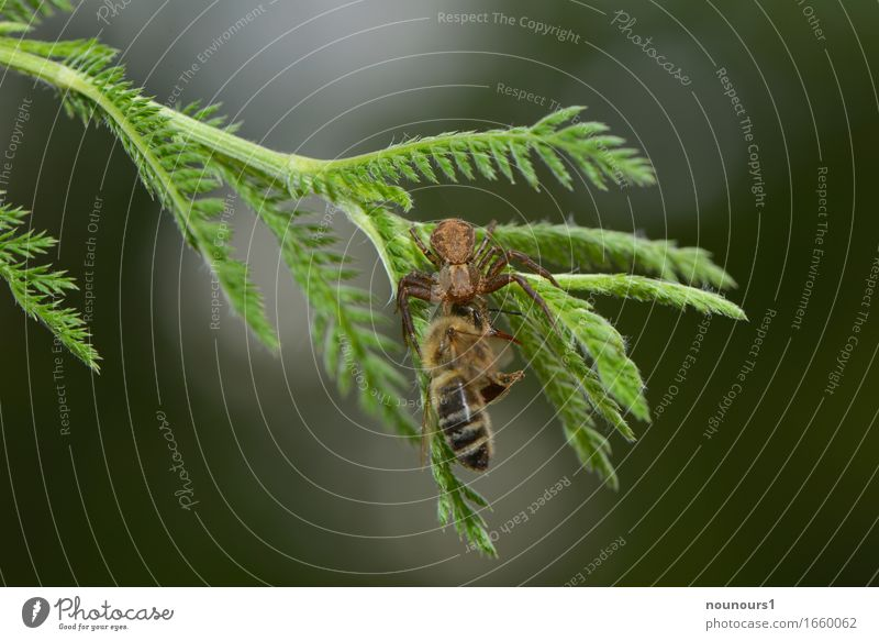 feat of strength Nature Plant Animal Tree Foliage plant Forest Wild animal Bee Spider Wing 2 To feed Hang Hunting Fight Crawl Aggression Threat Creepy Astute