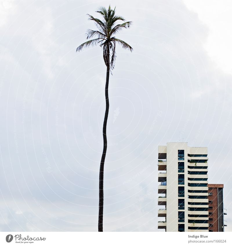 Ambitious Palm Tree Nature City Vacation & Travel Contentment Power Coast Funny Success Tall Thin Uniqueness Firm Curiosity Conduct