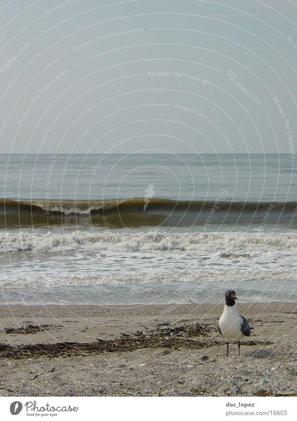 Edisto_Beach_1 Seagull Bird Waves Swell Dreary Moody Edisto Iceland USA Water Sand Landscape Surf Sandy beach Horizon Gloomy Coast Day Gray Copy Space top