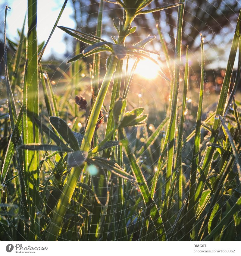 grass Leisure and hobbies Playing Vacation & Travel Summer Summer vacation Sun Environment Nature Landscape Plant Animal Sunrise Sunset Sunlight Spring Autumn