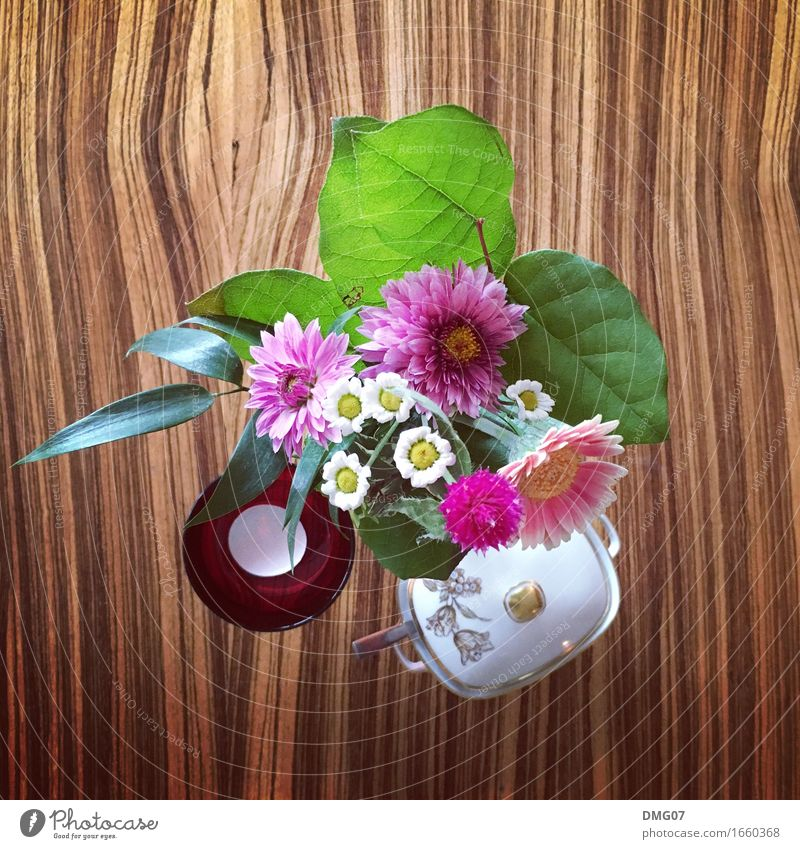 Plant Summer Flower Leaf Joy Environment Autumn Spring Lifestyle Style Art Party Design Decoration Music Table