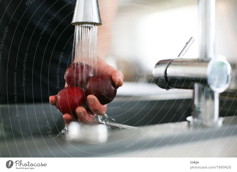 Round three plums Food Fruit Plum Nutrition Living or residing Kitchen Tap Hand 1 Human being Jet of water To hold on Healthy Wet Clean Cleaning 3 Fresh