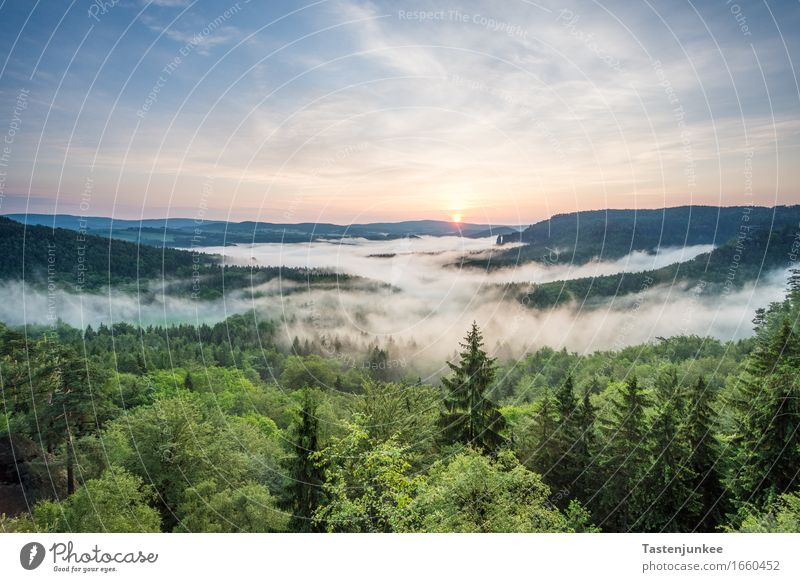 sunrise Environment Nature Landscape Sky Sun Sunrise Sunset Sunlight Beautiful weather Tree Forest Hiking Fog Morning Dawn Morning fog Dresden Bad Schandau