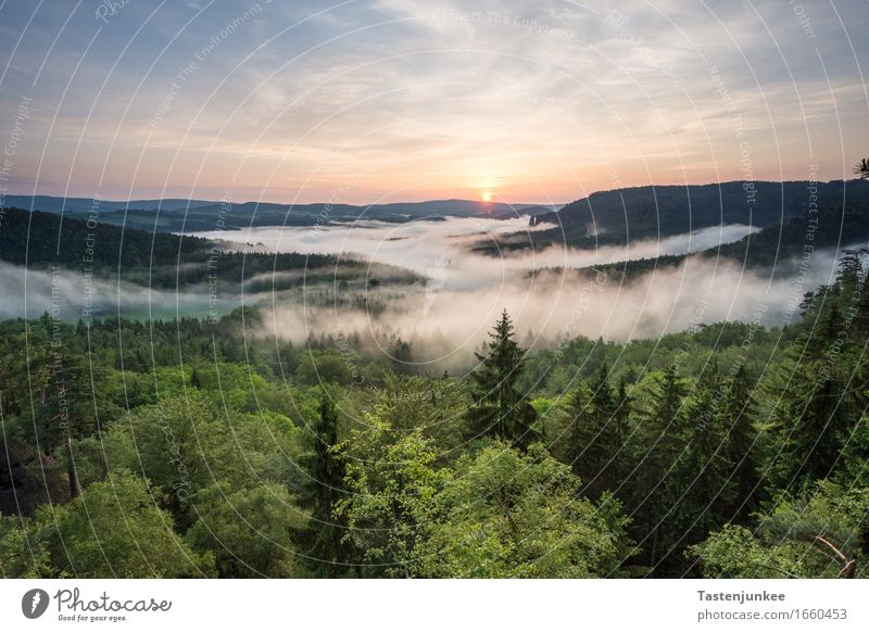 sunrise Environment Nature Landscape Sky Sun Sunrise Sunset Sunlight Beautiful weather Fog Tree Forest Hiking Morning Dawn Morning fog Germany Bad Schandau