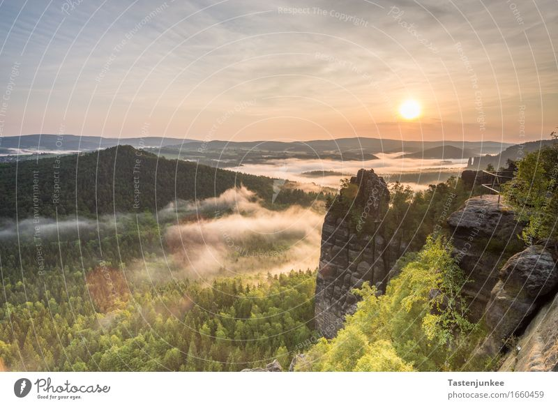 sunrise Nature Landscape Sky Sun Sunrise Sunset Sunlight Spring Fog Tree Hill Hiking Morning Dawn Morning fog Forest Germany Bad Schandau Dresden Elbe