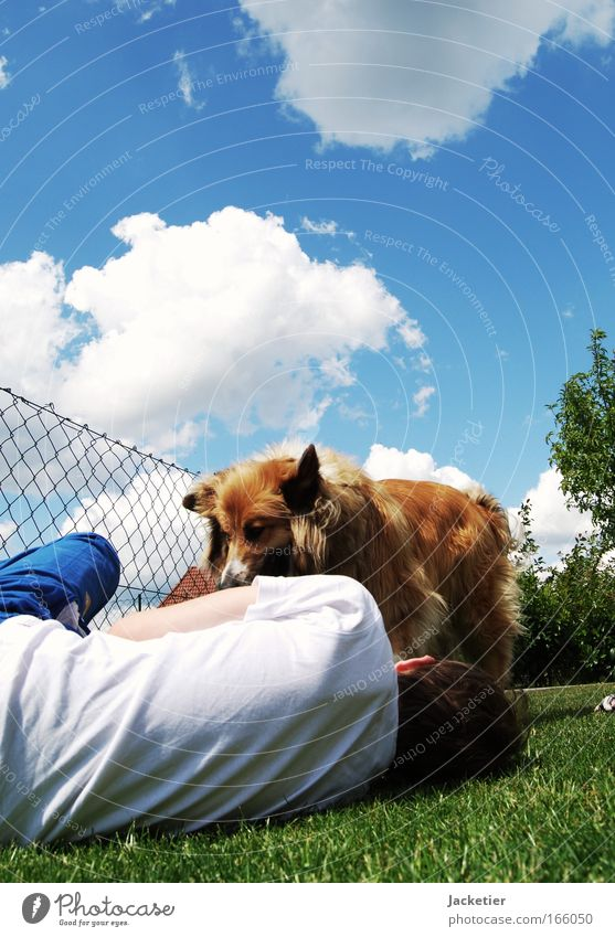 Take Hasso! Colour photo Exterior shot Day Worm's-eye view Environment Landscape Sky Clouds Summer Tree Grass Bushes Discover Lie Playing Blue Brown Green White