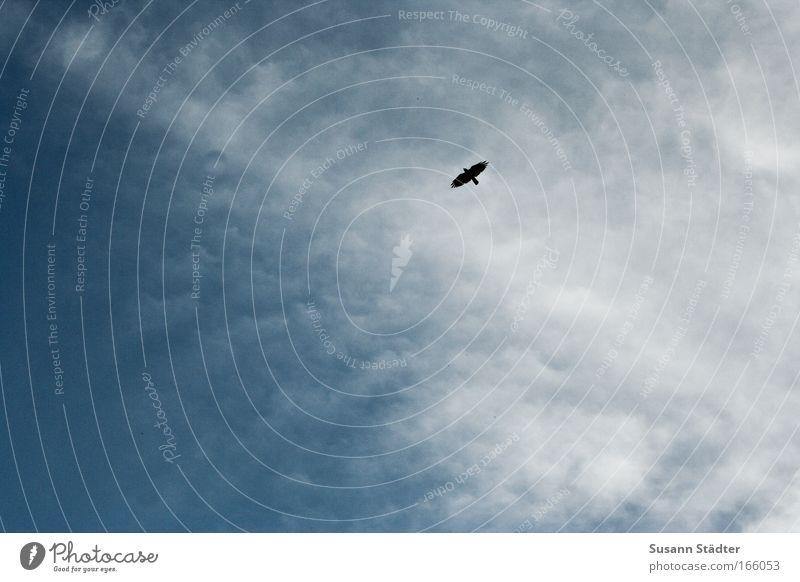 Sun Clouds Calm Far-off places Freedom Style Air Dream Bird Contentment Wild Tall Trip Design Success Living or residing
