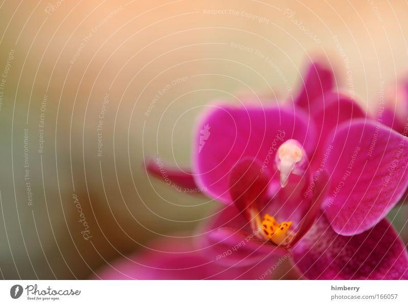Nature Beautiful Flower Plant Joy Relaxation Style Blossom Happy Contentment Pink Design Elegant Fresh Esthetic Wellness