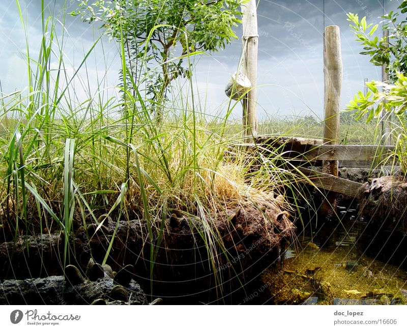 perfect world Footbridge Green Grass Blade of grass Tree Landscape Coast Water Plastic world Moody Nature