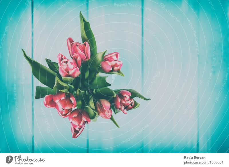 Wet Pink Tulip Flowers In Vase Environment Nature Plant Drops of water Spring Leaf Blossom Pot plant Wood Blossoming Blue Green Red Turquoise Spring fever