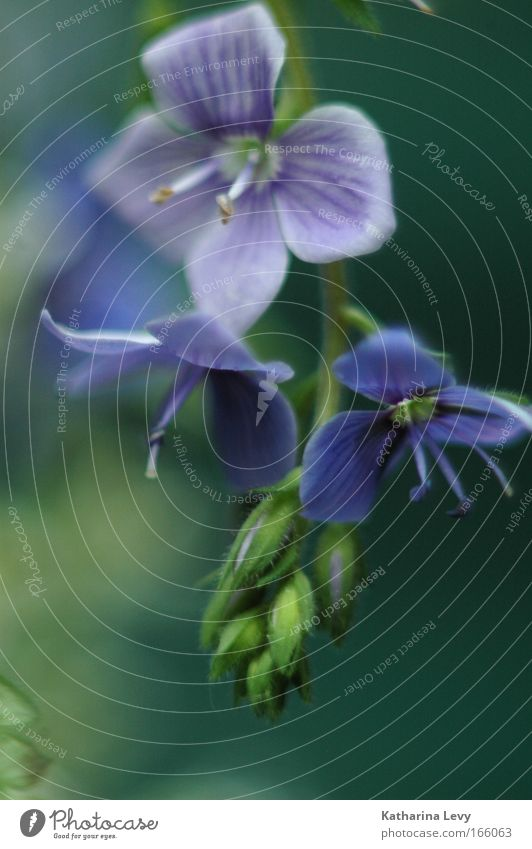 Nature Flower Green Blue Plant Calm Blossom Spring Environment Esthetic Violet Longing Beautiful weather Wild plant