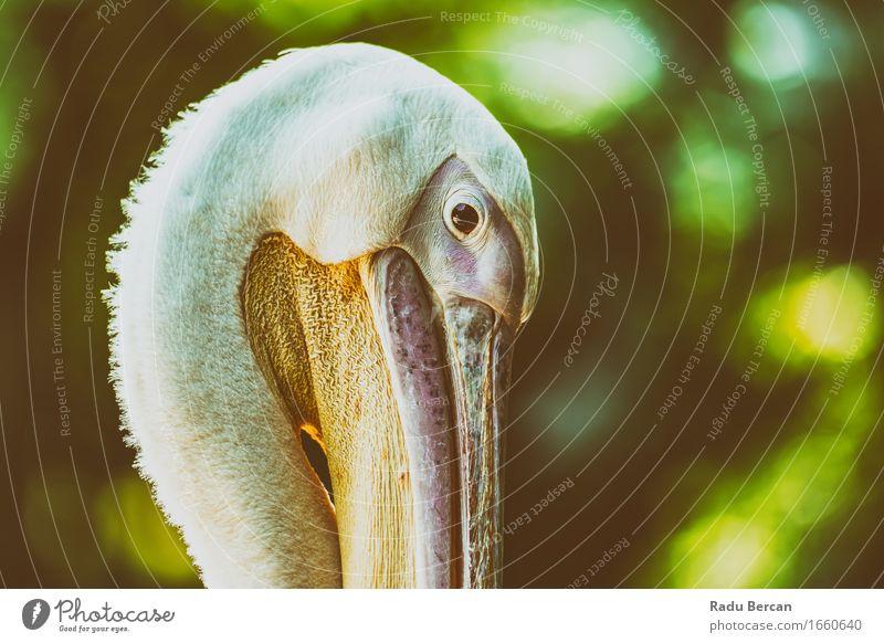 Wild Pelican Portrait Nature Colour Beautiful Green White Animal Bird Orange Pink Head Wild animal Friendliness Near Animal face Zoo