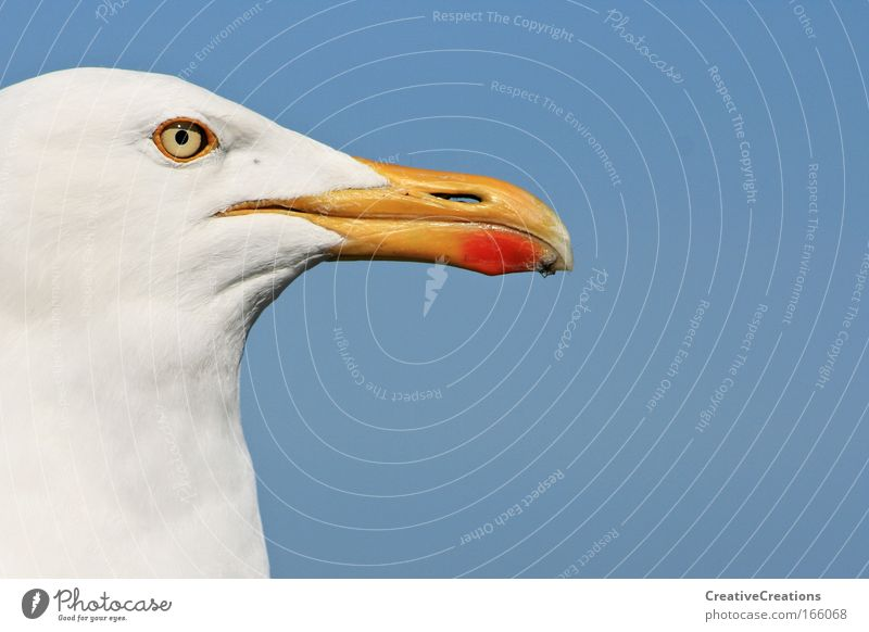 * Seagull with vision * Colour photo Exterior shot Copy Space right Copy Space top Day Animal portrait Profile Far-off places Freedom Summer Ocean Wild animal