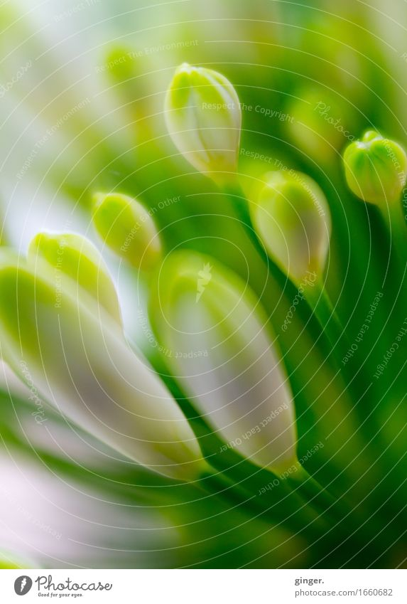 Nature Plant Green White Flower Blossom Spring Small Blossoming Soft Many Near Delicate Bud Mixed