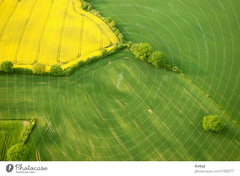 rapeseed patches Colour photo Aerial photograph Pattern Deserted Copy Space right Copy Space bottom Day Sunlight Bird's-eye view Environment Landscape Plant