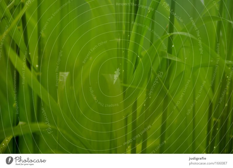 grass Colour photo Exterior shot Close-up Day Worm's-eye view Environment Nature Plant Spring Summer Beautiful weather Rain Grass Meadow Growth Green