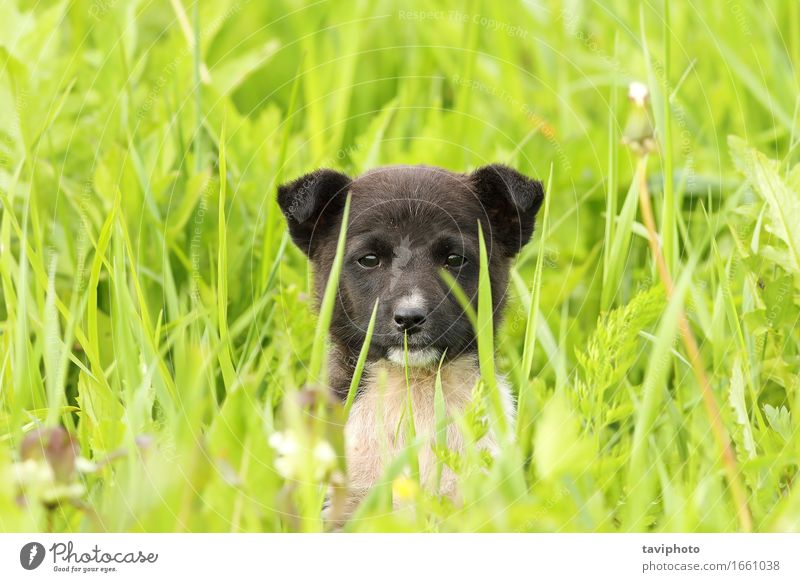 face of a black doggy Happy Beautiful Summer Baby Friendship Nature Animal Grass Park Meadow Fur coat Pet Dog Sit Stand Small Funny Cute Green Black White